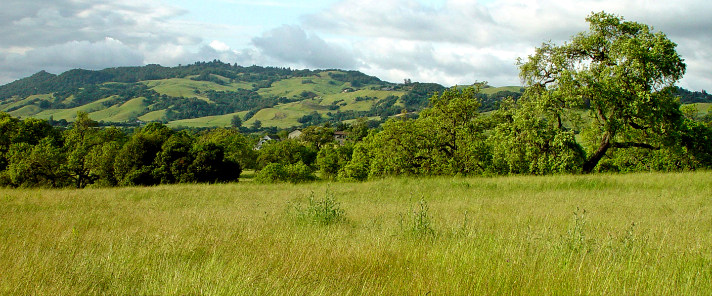 Grass, trees and hill