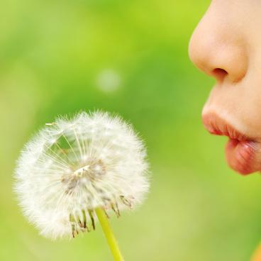 Child is blowing a flower